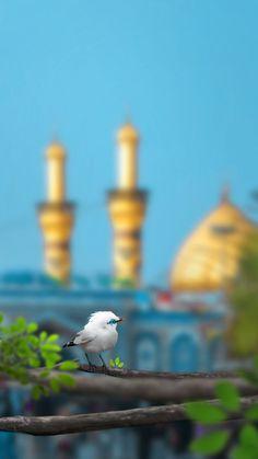 #Ahlebait #Ahlulbayt #Karbala Imam Hussain Karbala, Hazrat Imam Hussain, Imam Reza, Imam Ali, Dslr Background Images, Picsart Background, Islamic Images, Islamic Pictures, Karbala Pictures