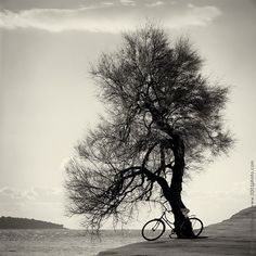 Black and white photography. Fine art film photography. Large photography: Tree and bicycle on the beach on Etsy, $25.00