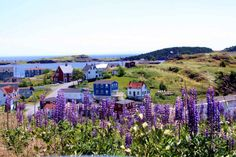 Trinity in Newfoundland in July is an absolute paradise for anybody who loves wild flowers. Trinity in Neufundland im Juli ist . Newfoundland And Labrador, Newfoundland Canada, Constitution Of Canada, Places To Travel, Places To See, Beautiful World, Beautiful Places, Canadian Travel, Atlantic Canada