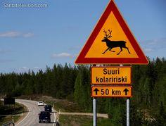 Perigo Rena: Sinal de trânsito de renas cruzando a Estrada na Lapônia no Norte da Finlândia