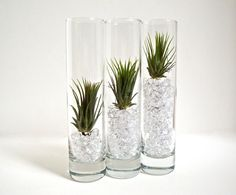 Tillandsia Glass Terrariums with Acrylic Crystals