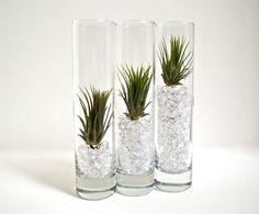 Tillandsia Glass Terrariums with Acrylic Crystals