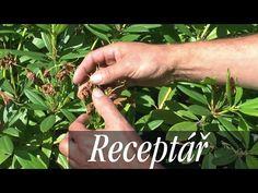 Rododendrony – jak dosáhnout bohatého kvetení v každém roce Holding Hands, Hair Beauty, Youtube, Plants, Gardening, Lawn And Garden, Plant, Youtubers