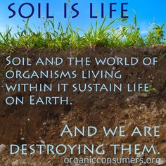 We rarely stop to think about protecting life within the soil from deadly agricultural chemicals. But it's time we start, because healthy soil can sequester carbon and save the planet. Organic Farming, Organic Gardening, Gardening Tips, Carbon Sequestration, Save Our Earth, Save Nature, Living Off The Land, Eating Organic, Green Life