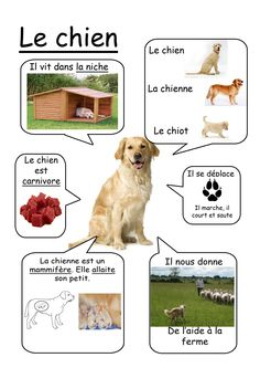 Chien - Animaux de la ferme #learnfrench http://www.uniquelanguages.com