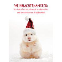 Weihnachtshamster/Bild1