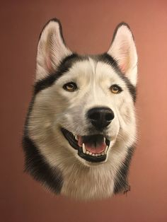 pastel husky - portrait de husky au pastel - art animalier - dessin animalier #husky #malamute #nordikdog #dogdrawing #dogpainting #dogdraw #dogart #animalart #artisteanimalier #portraitanimalier #artanimalier Wolf Husky, Siberian Husky Dog, Malamute, Cartoon Photo, Pastel Art, Dog Portraits, Dog Art, Dog Pictures, Great Artists