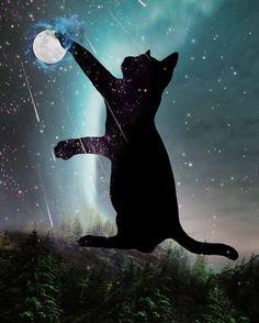 Cat and the moon - cat art Wallpaper Gatos, Cute Cat Wallpaper, Crazy Cat Lady, Crazy Cats, Galaxy Cat, Cat Whisperer, F2 Savannah Cat, Black Cat Art, Moon Art