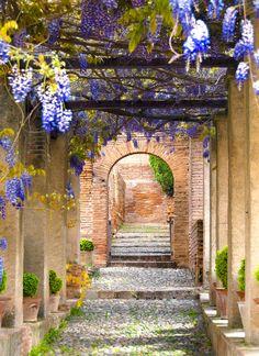 Tuinposter: Doorkijk met blauwe regen - Teun's Tuinposters