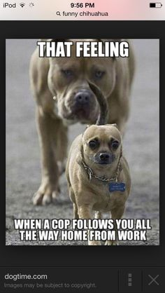45 Funny Dog Memes - Funny Dog Quotes - 25 funny dog memes that feature a picture of a pooch and a funny caption written by a human. The post 45 Funny Dog Memes appeared first on Gag Dad. Funny Animals With Captions, Cute Animal Memes, Funny Animal Quotes, Funny Captions, Animal Jokes, Cute Funny Animals, Cute Baby Animals, Animal Captions, Funny Quotes