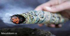Salvia, Mantra, Healthy Holistic Living, Burning Sage, Purifier, Smudge Sticks, Natural Health, Feng Shui, Cleanse