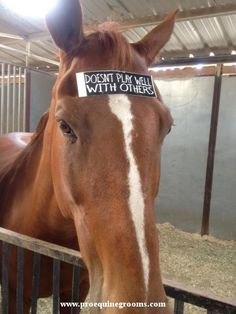Do you know a horse that needs this?