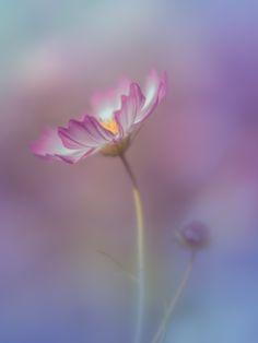 memories by Miyako Koumura - Photo 132912125 - 500px