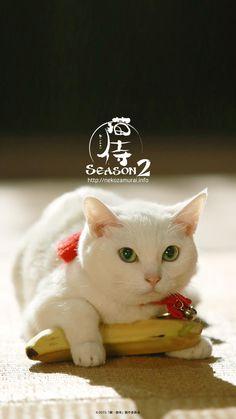 そして、なんと!!あなご(猫)・さくら(猫)&北村一輝さん主演の「猫侍」様より、公式グッズを戴きました!!当日、ボランティア体験をしてくださった方に先着でプレゼントします!(数に限りがございます、ご了承ください)来たれ!肉球まつり!!                                                                                                                                                                                 もっと見る