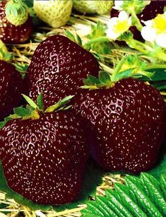 Growing Raspberries, All About Plants, Amazing Gifs, Fruit Photography, Beautiful Fruits, Exotic Fruit, Fruit Garden, Healthy Fruits, Fruit Trees