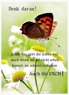 The post Danke Daizo appeared first on Blumen ideen. Motivational Quotes For Life, Life Quotes, Motivational Wallpaper, German Words, Text Pictures, Positive Quotes For Life, Magic Words, Monday Motivation, Thankful