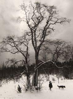 Helsinki (winter forest, small child, dog), by Pentti Sammallahti Vintage Photography, Street Photography, Landscape Photography, Art Photography, B&w Tumblr, Arte Yin Yang, Artist Grants, Henri Cartier Bresson, Gelatin Silver Print