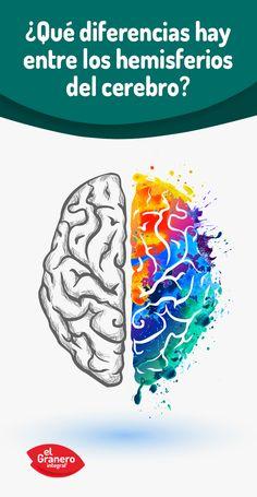 ¿Qué diferencias hay entre el lado izquierdo y derecho del cerebro? #neurología #psicología #health #science #mental