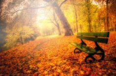 fall.... beautifull fall