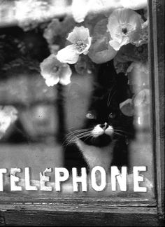 Brassaï, Colette's cat, 1938