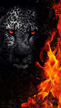 Predator Animal iPhone Wallpaper - iPhone Wallpapers