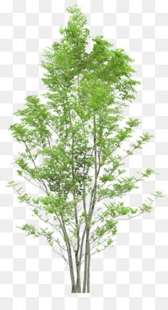 Tree png photoshop art ideas for 2019