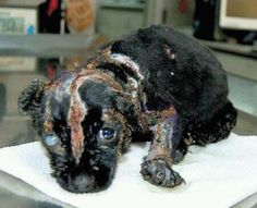 THIS KIND OF CRUELTY HAS TO STOP! #Animal #Abuse