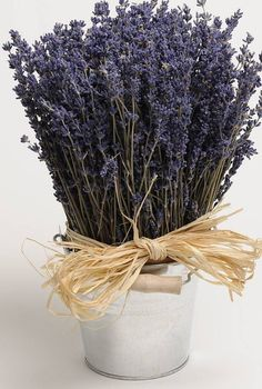 Лаванда #lavender