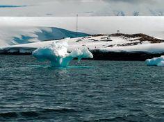 """petit """"Growler """" à proximité de Port-Lockroy. Pénisule Antarctique."""