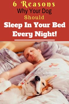 2 best healthy raw dog food recipes for american bullies american 6 reasons why your dog should sleep in your bed every night forumfinder Choice Image
