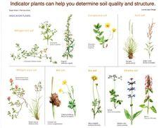 """Indicator plants can teach you about your soil!  From """"Sepp Holzer's Permaculture"""" (available here ---> http://amzn.to/ZW5Fbh):"""