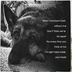 24 Ideas tattoo dog memorial rainbow bridge i miss you I Love Dogs, Cute Dogs, Miss My Dog, Pet Loss Grief, Dog Poems, Motivacional Quotes, Pet Remembrance, Dog Heaven, German Shepherd Dogs