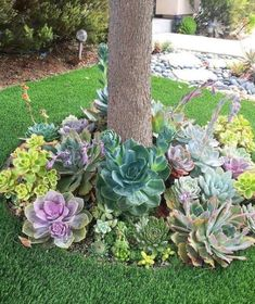 50 Green Backyard and Front Yard Landscaping Ideas - Hinterhof Garten landschaft - Paisagismo Succulent Landscaping, Succulent Gardening, Front Yard Landscaping, Succulents Garden, Landscaping Ideas, Mulch Landscaping, Desert Landscaping Backyard, Landscaping Borders, Backyard Ponds