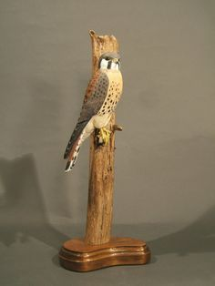 American Kestral by GeneBoyd on Etsy, $1500.00