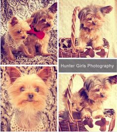 pretty cute dogs - pet photography...this needs to be my Christmas Card!!!!