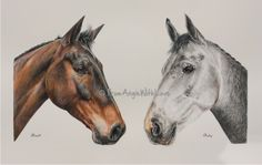 This double horse portrait in coloured pencil was commissioned as a gift for British Eventing competitor Sophie of her horses Basil and RubY. Coloured pencil on Bristol board