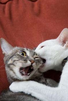 Ask Amy: Aggressive Cat: Photo of Two Cats Fighting