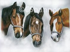 Hand drawn horse portraits and horse fine art, from your photos. Horse Portrait, Horse Drawn, Pet Portraits, Colored Pencils, Equestrian, How To Draw Hands, Sketches, Horses, Fine Art