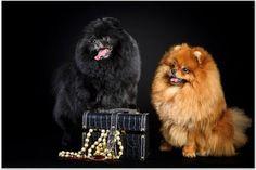 Recursos Chele Guada: Wallpapers de Cachorros perros y gatos nº 9 (115 jpg)