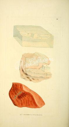 022-soda muriata, Muriate of Soda, Common Salt, soda fibrosa, Fibrous Muriate of Soda      ...