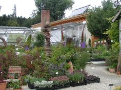 geniesser garten staudeng rtnerei gaissmayer illertissen gartenreise 2 garden decor. Black Bedroom Furniture Sets. Home Design Ideas
