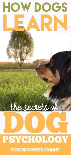 How Dogs Learn: The Secrets of Dog Psychology - Good Doggies Online Training Your Puppy, Dog Training Tips, Leash Training, Training Pads, Obedience Training For Dogs, Crate Training, Potty Training, Dog Psychology, Easiest Dogs To Train