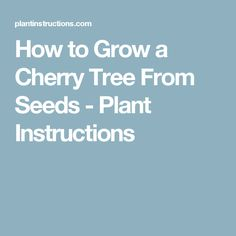 How to Grow a Cherry Tree From Seeds - Plant Instructions