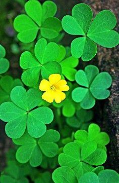 Green Wallpaper, Nature Wallpaper, Flowers Nature, Beautiful Flowers, My Flower, Flower Power, Lucky Plant, Virtual Flowers, Yellow Plants