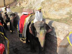 Ride an elephant through the jungles of Inida