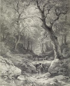 Forest Scene ~ artist Paul Weber, early pencil on paper, 6 x 4 in. German drawings, The Walters Art Pencil Art, Pencil Drawings, Art Drawings, Landscape Drawings, Landscape Art, Graphite Drawings, Drawing Sketches, Academic Drawing, Arte Popular