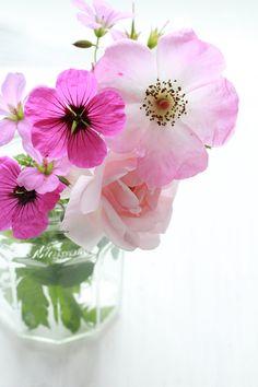 https://flic.kr/p/eXs1az   June Flowers