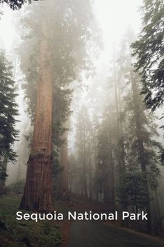 Sequoia National Park National Park: by Rachel Lynn on Sequoia National Park, National Parks, Mountains, Check, Photography, Travel, Fotografie, Photography Business, Photo Shoot