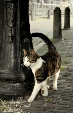 "Fine Art Cat Photo print - ""City Walk"""