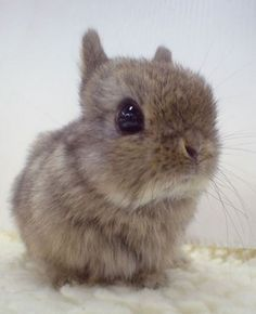 Fluffy little bunny.... little bunny foofoo walkin through the snow..